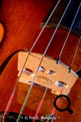 A close-up photograph of a violin's bridge and strings, Hilliard, Ohio.